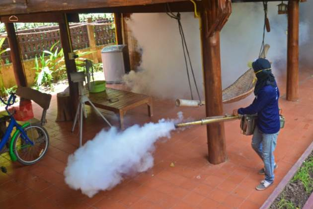 dengue fever Thailand