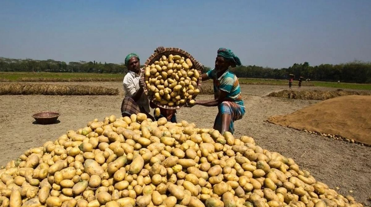Kenyan potato farmers
