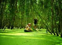 Tra Su forest bird sanctuary
